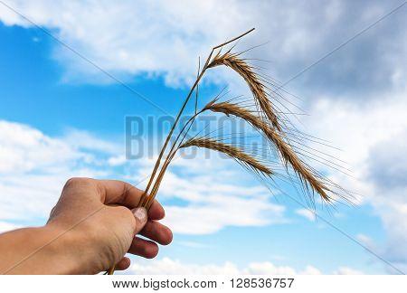 Female hand holding spica against blue sky