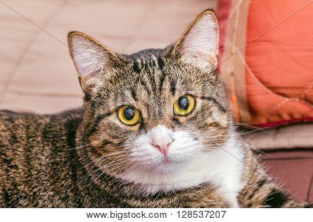 Portrait of smart striped cat like model