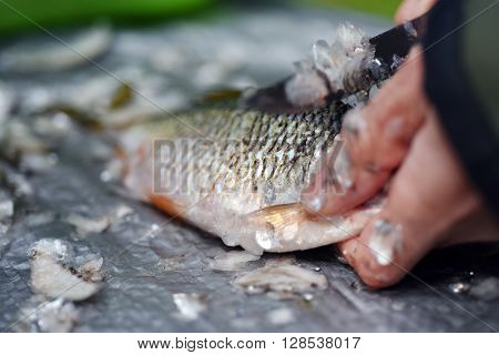 Fisherman cleaning a fish with a knife