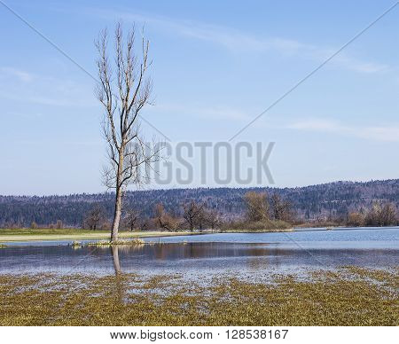 Flooded land with a tall tree surrounded with water.