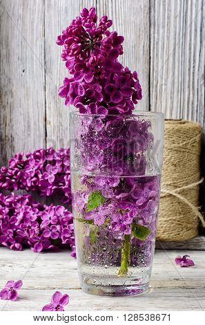 May Lilacs In Vase