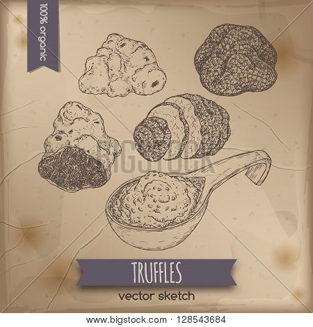 Vintage white, black truffles and truffle sauce sketch placed on old paper background. Great for restaurant, cafe, markets, grocery stores, organic shops, food label design.