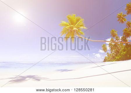 Beautiful Scenic Beach Palm Tree Concept