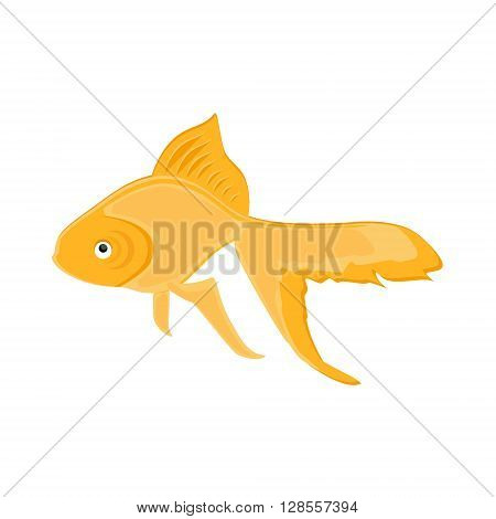 Vector illustration realistic goldfish. Swimming gold fish icon