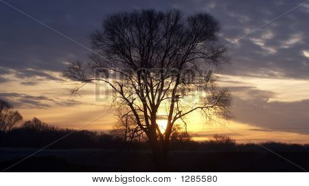 Tree Under The Sunset Clouds
