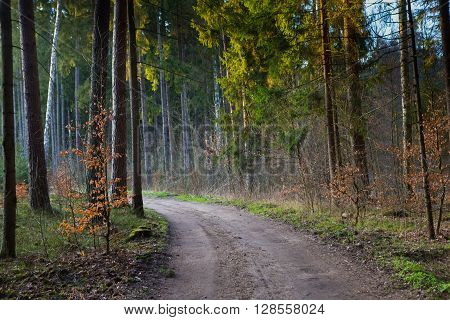 Footpath in green forest. Early springtime forest at sunset.