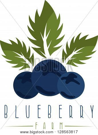 Vector Design Template Of The Blueberry Farm