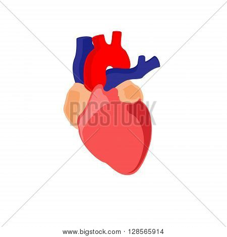 Vector illustration human heart anatomy icon symbol. Diagnostic center