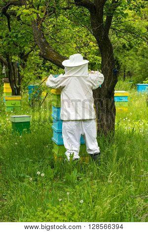 Beekeeper Working On His Beehives In The Garden