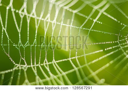 Cobwebs On The Grass With Dew Drops