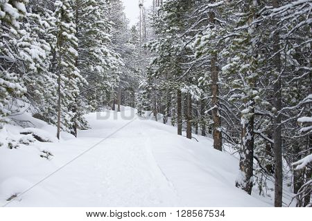 Beautiful winter hiking trail snow packed scene landscape background with snow covered green trees in a wild park setting