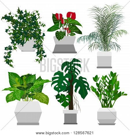 Set of potted houseplants. Home flowers made in flat style. Vector illustration.