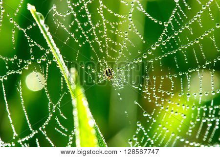 Cobwebs on the grass with dew drops - selective focus copy space