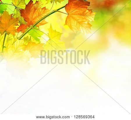 Golden Autumn foliage background with copy space. Photo. colorful autumn foliage.