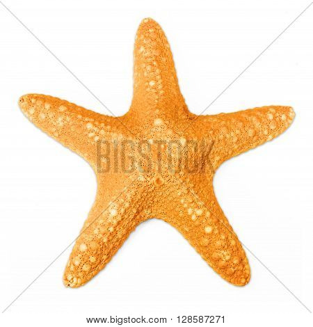 Starfish in orange color isolated on white background