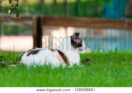 Close up of gorgeous kitty outdoors laying on green grass looking sideways with wood fence in background.