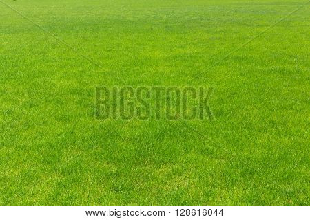 lawn with new green grass