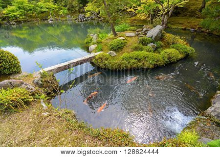 Traditional Japanese pond garden with colorful orange carp fish