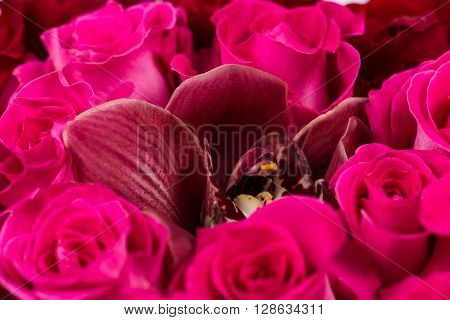 Cymbidium orchid bouquet of pink roses macro