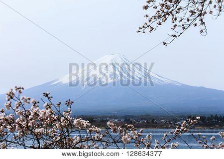 Mount fuji at Lake kawaguchiko in the morning. Sakura season in Japan.