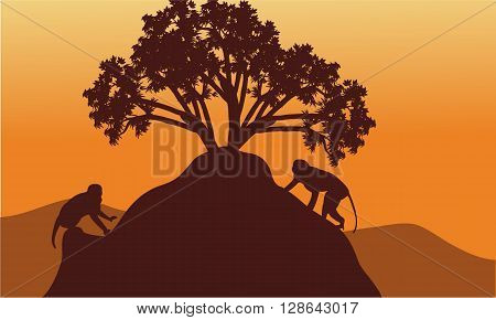 Monkey in hills scenery at sunset with brown backgrounds