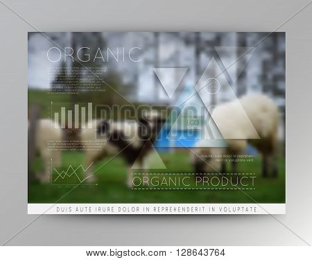 Vector blurred landscape with sheep, eco badge, ecology label, nature view with rams.Green, organic product. Eco products, organic standard, or premium quality green product.