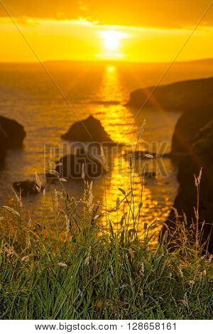 beautiful sunset over the coastal rocks with wild tall grass on the wild atlantic way