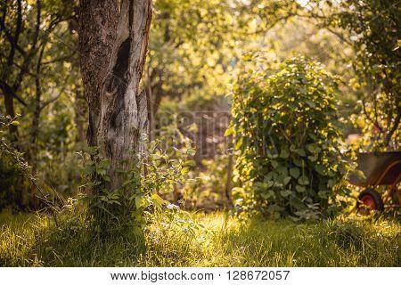 tree in summer garden with wheelbarrow,  horizontal.