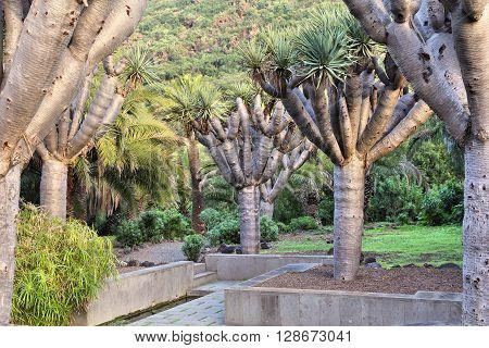 Jardin Canario