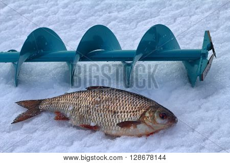 Fishing For Roach In The Winter On Ice