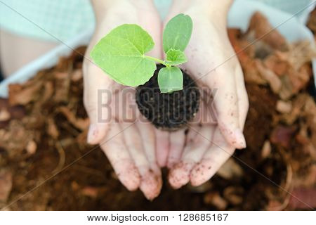 A girl grows melon sapling in small home garden