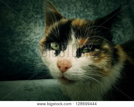 Lifestyle portrait of young kitten at home laying on sofa