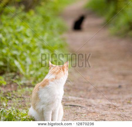 schwarze Katze - weißer Kater