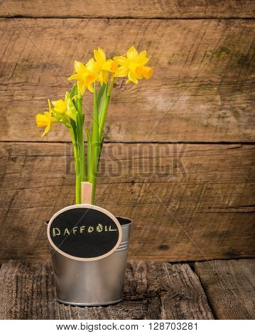 Potted spring daffodil with a chalk board sign.