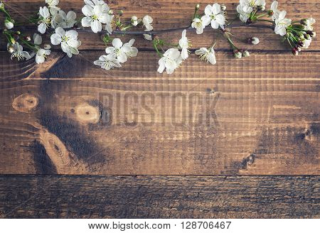 Cherry blossom on wooden background. Single branch. Free space for design.