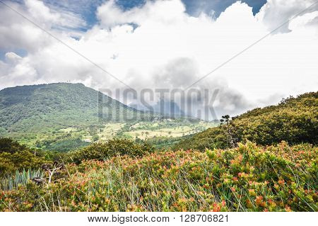 The green valley and flowers in between the volcanoes of Santa Ana Izalco and Cerro Verde Izalco peak covered with thick white clouds in El Salvador