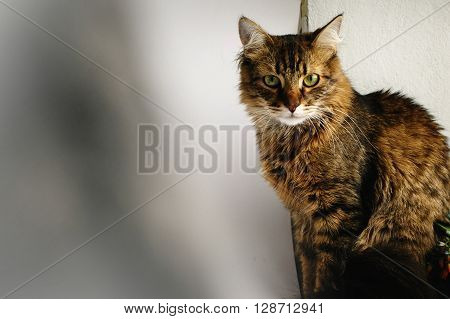 Beautiful Cute Domestic Cat On Window Home, Sitting And Looking