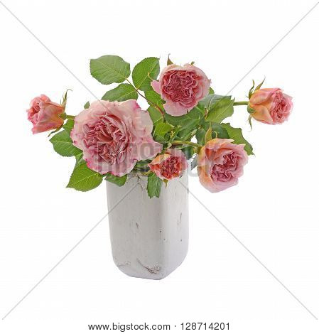 Bouquet of pink and cream china roses in vase isolated on white background