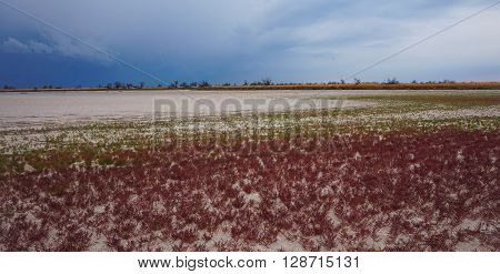 Colored grass in the bottom of the dry lake