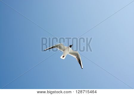 Seagulls in blue sky ob blue weather