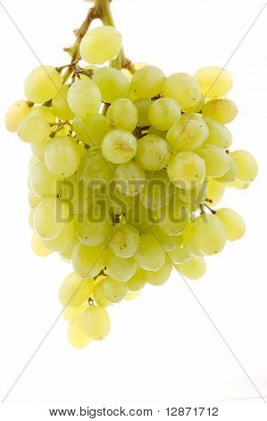 seedless grapes branch