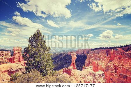 Vintage Toned Landscape In Bryce Canyon National Park.