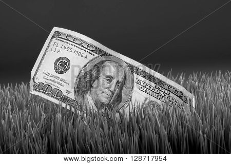 Cash in the grass in black and white.