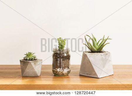 Three cactus and succulent concrete planters interior style