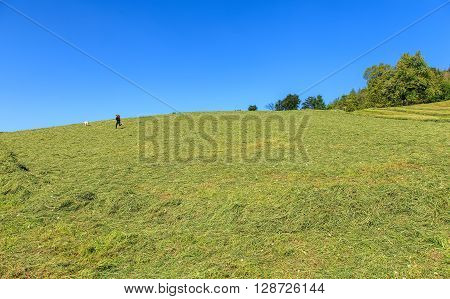 Zug, Switzerland - 6 May, 2016: a young girl playing with a dog on a meadow cowered by freshly mowed grass. The town of Zug is the capital of the Swiss canton of Zug as of 31 December 2014 it had a total population of 28603 inhabitants.