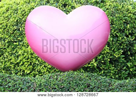 Closed up Pink heart on green hedge