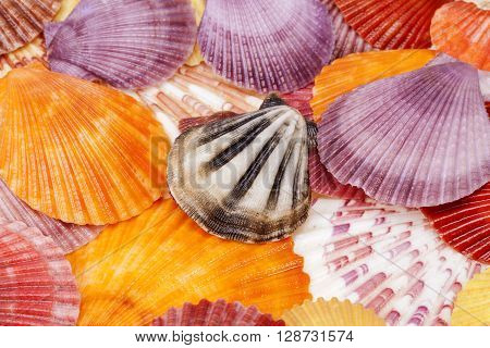 background with colorful sea shells of mollusks close up.