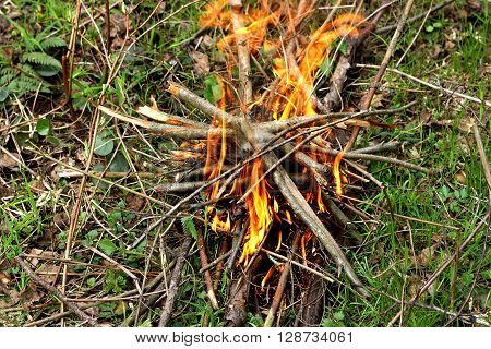 A fire in the woods. Kindled a fire with dry twigs and sticks on the green grass.