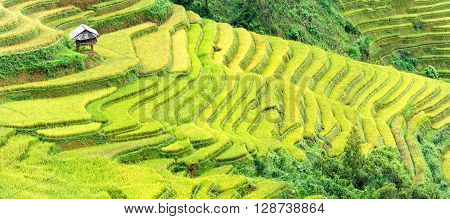 Little House on terraced fields protruding covered vast blue and gold across the hills. It voted as top 10th in the world beautiful landscapes created by man in Yen Bai, Vietnam