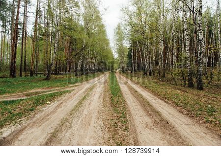 two rural dirt road through a forest.